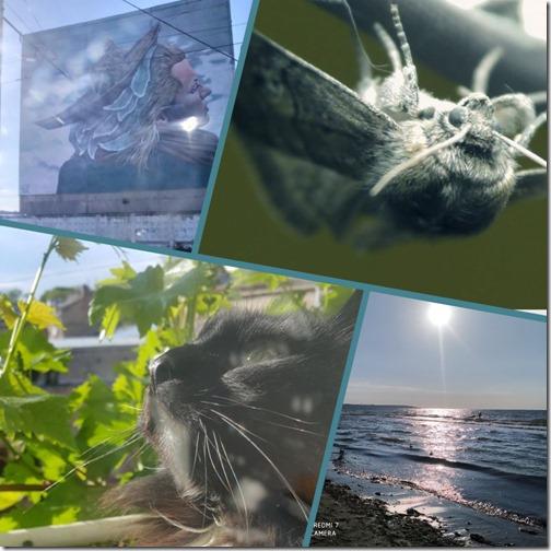 ШАРГА.Collages4